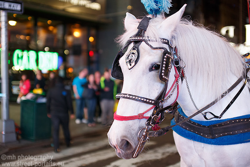 horse - time square nyc