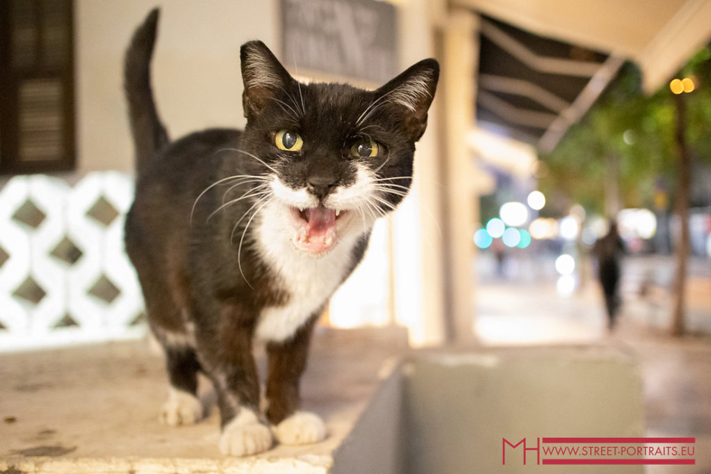 Cats are very welcome in Tel Aviv